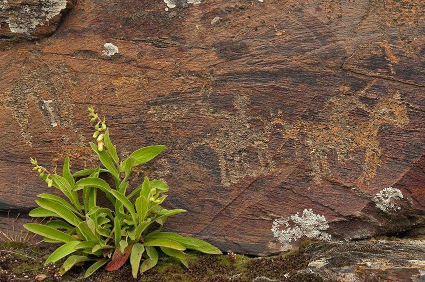 Petroglifos. Domingo García - Huellas de historia - Fósiles, arqueología, historia - Roberto Bueno – Miliarios, museos, tumbas