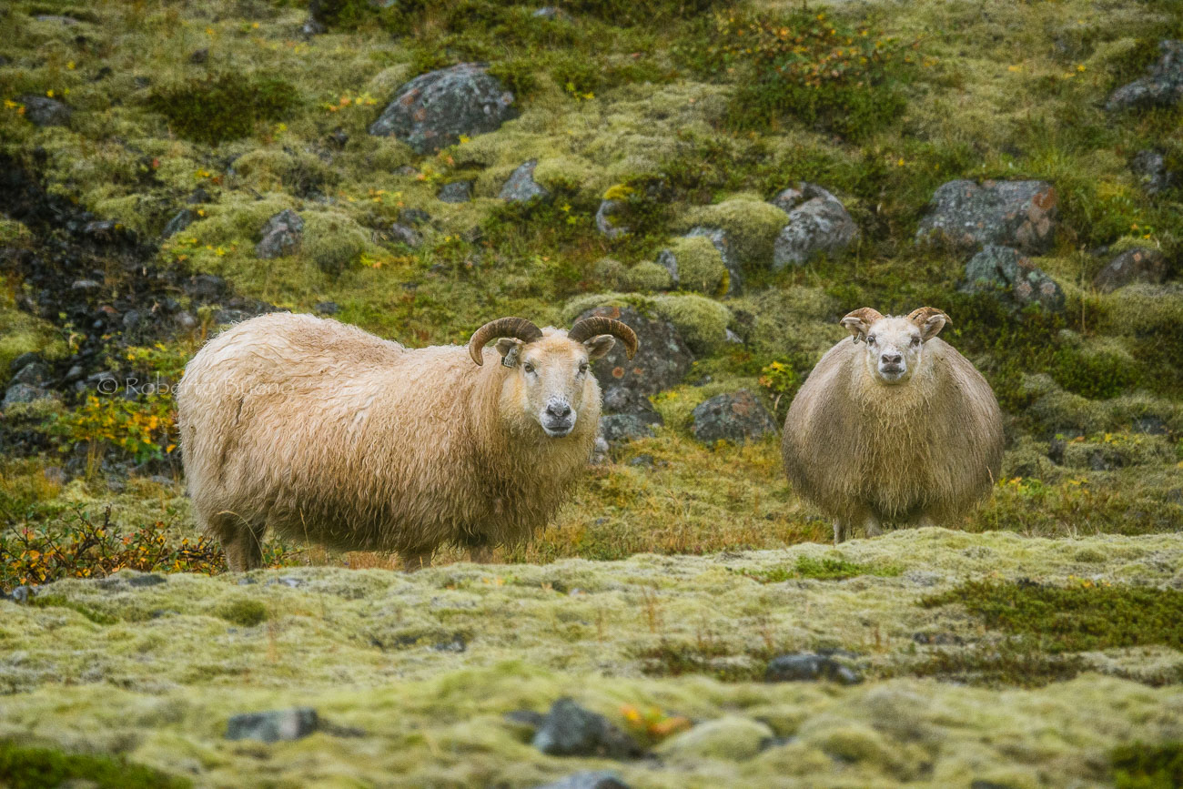 La pose - Islandia - Islandia