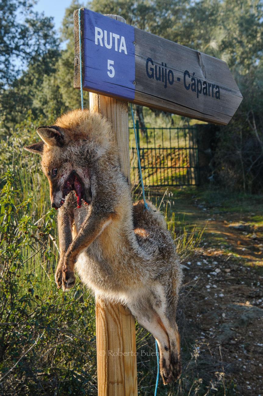 Vergüenzas humanas - Human shames - Wildlife - Roberto Bueno – Photography, Nature, mammals, birds, insects, arachnids, amphibians