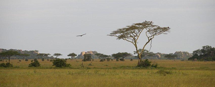 La sabana africana. Serengeti. Tanzania - África - Roberto Bueno. Fotografías de Tanzania y Namibia. África