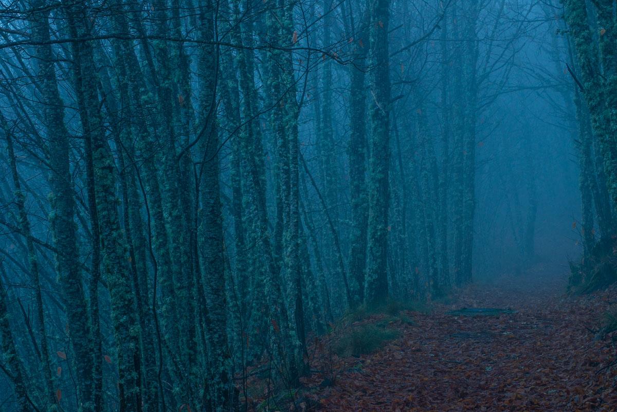 Castaños en la niebla. Reserva de la Biosfera de las Sierras de Béjar y Francia - Sierras de Béjar y Francia - Reserva de la Biosfera - Roberto Bueno - Fotografía de Naturaleza