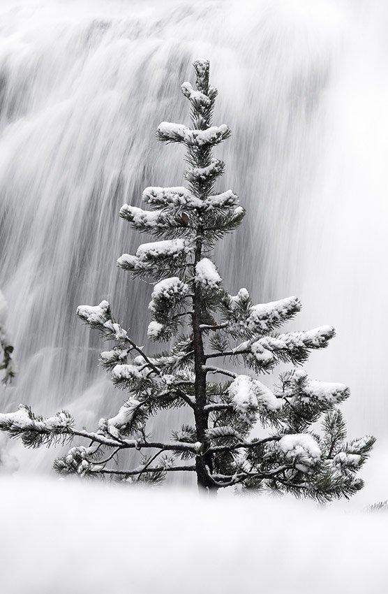 Conífera y cascada - Blanco y Negro - Blanco y Negro - Roberto Bueno - Fotografía de Naturaleza
