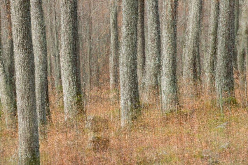 Otoño en la Dehesa - Con Otros Ojos - Con Otros Ojos - Roberto Bueno – Fotografía, Naturaleza, Abstracciones