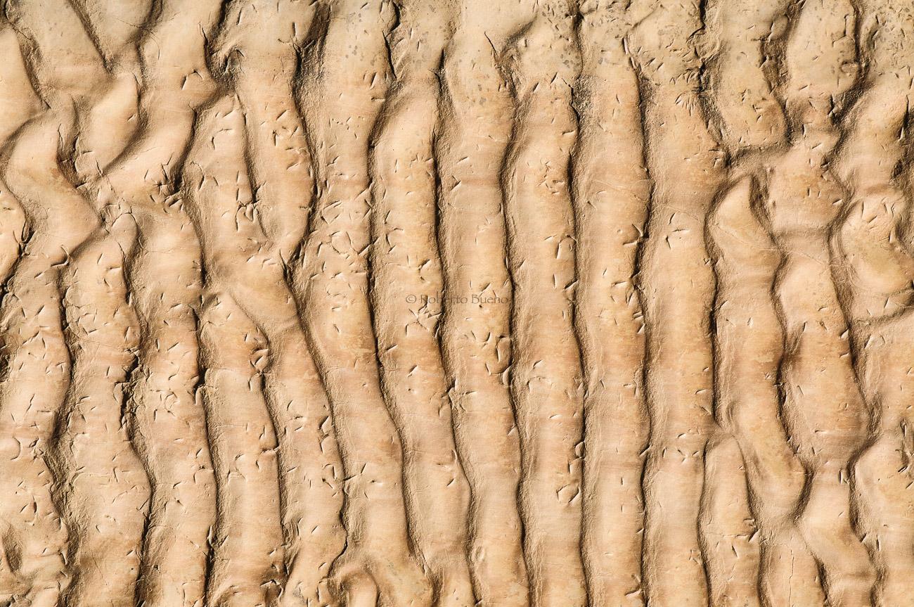 Ripple marks y huellas fósiles de aves. Peralta de la Sal - Huellas de historia - Fósiles, arqueología, historia - Roberto Bueno – Miliarios, museos, tumbas