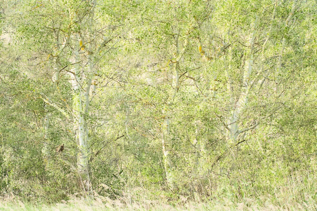 El rincón del aguilucho lagunero. Reserva de Sebes. Flix - Con Otros Ojos - Con Otros Ojos - Roberto Bueno – Fotografía, Naturaleza, Abstracciones