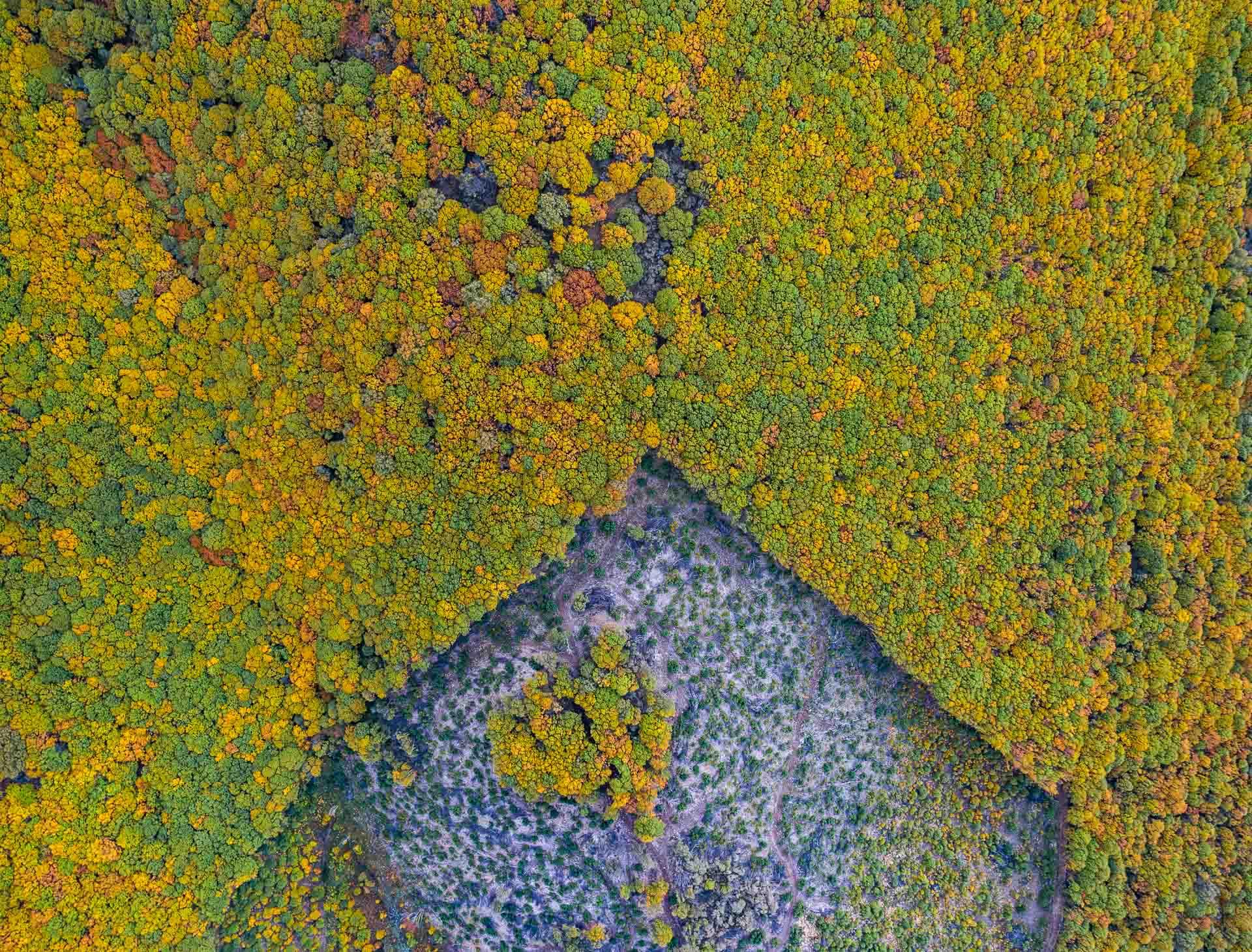 Tala en el bosque. Sierra de Béjar. Salamanca - Desde el aire 2 - Roberto Bueno - Fotografía de Naturaleza - Luces del Planeta - Desde el aire