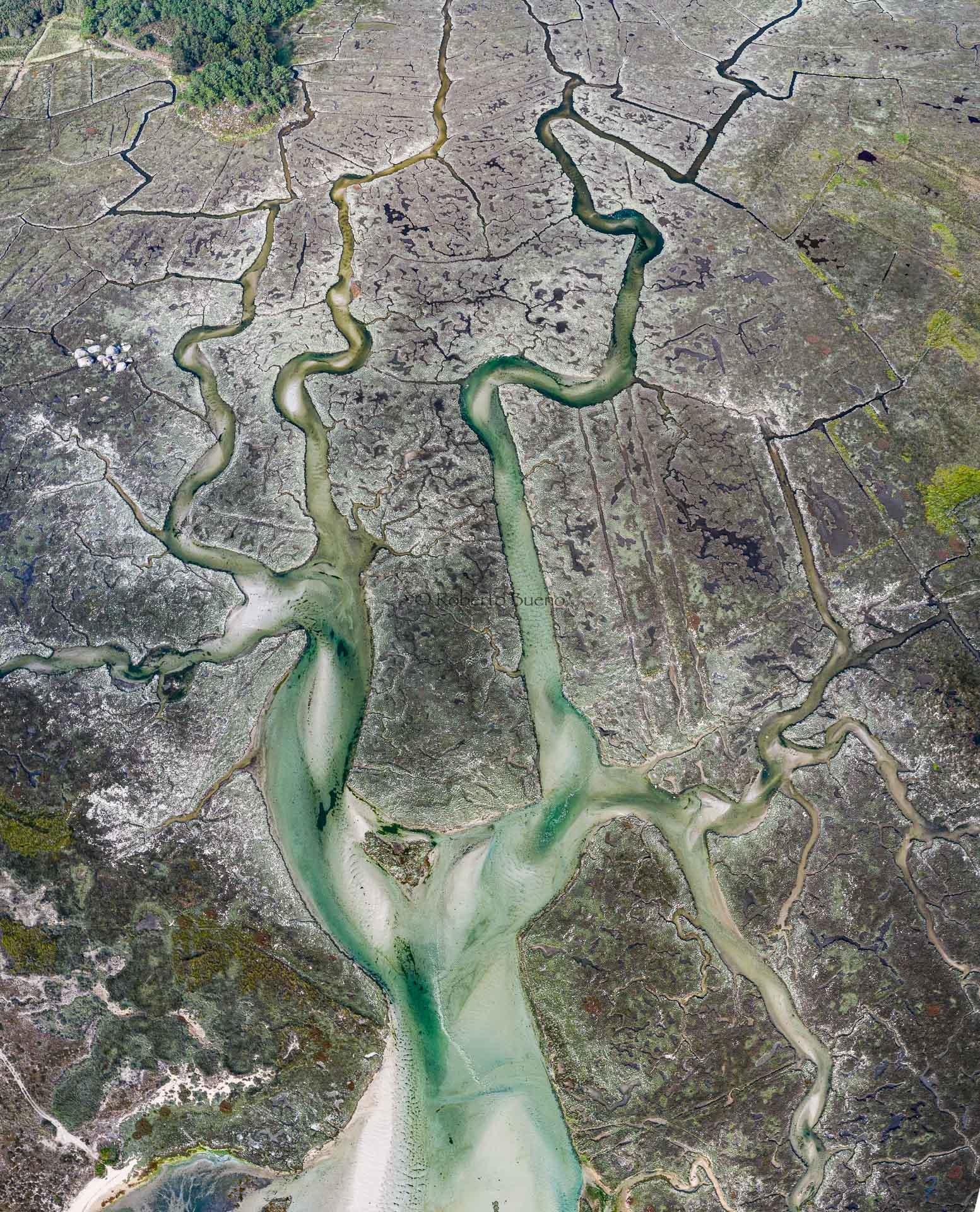 El árbol horizontal - Desde el aire 2 - Roberto Bueno - Fotografía de Naturaleza - Luces del Planeta - Desde el aire
