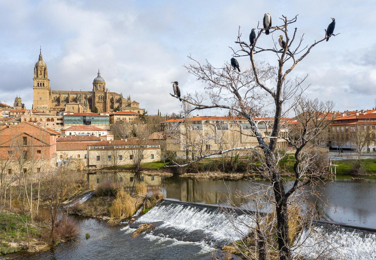 Cormoranes y catedral de Salamanca - Aves - www.robertobueno.com, Luces del planeta