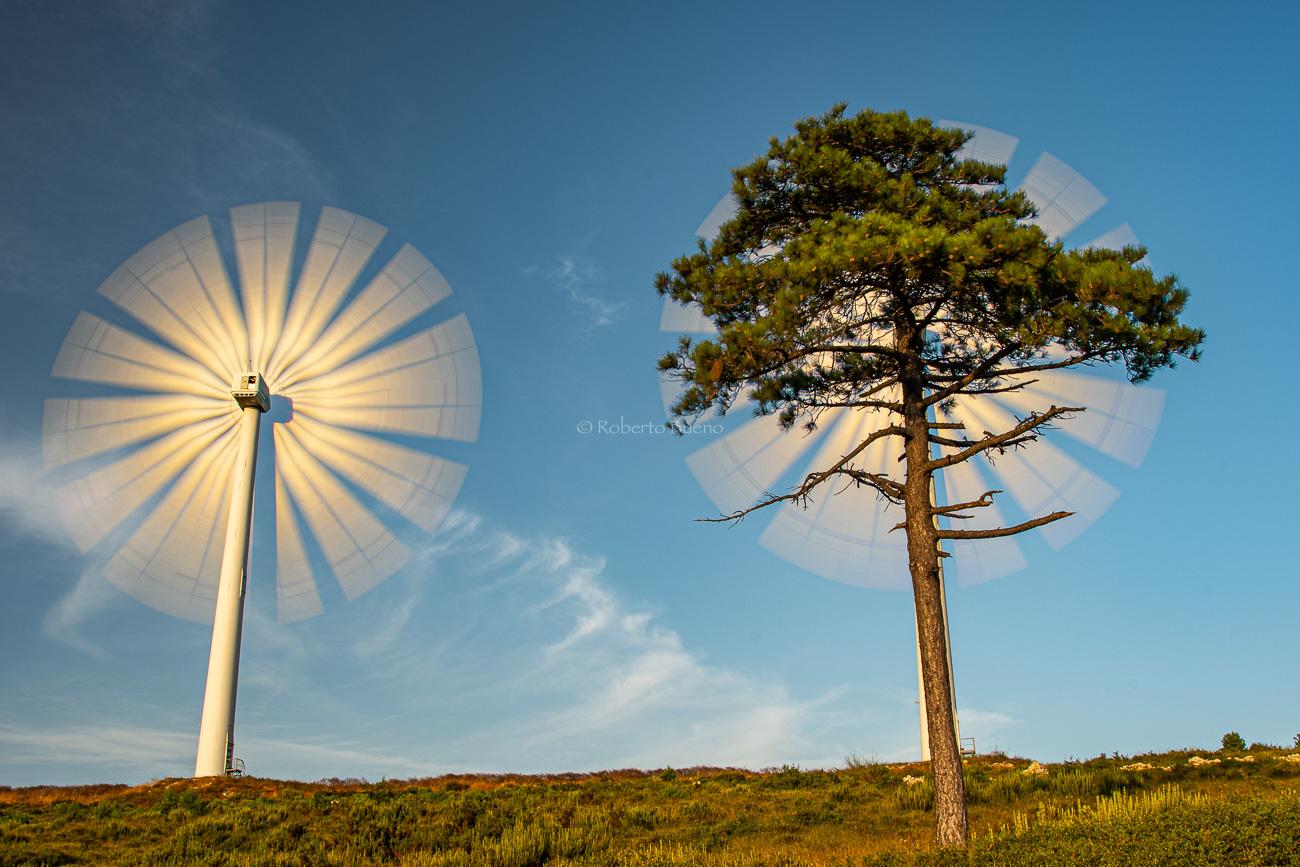 Aerogeneradores y pino - Energía eólica - Roberto Bueno. Fotografías Energía eólica y aerogeneradores