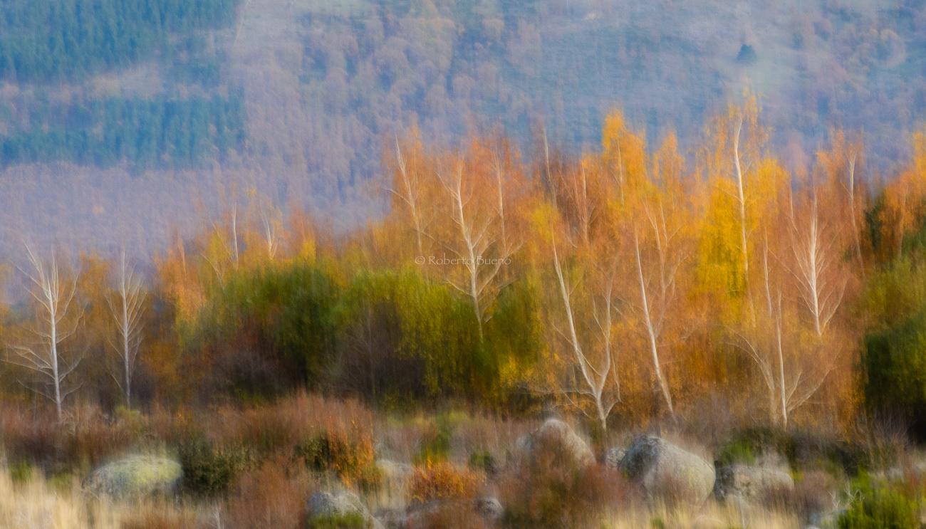 Luces de otoño. Sierra de Béjar - Luces del Planeta - Luces del Planeta - Roberto Bueno – Fotografía de Naturaleza