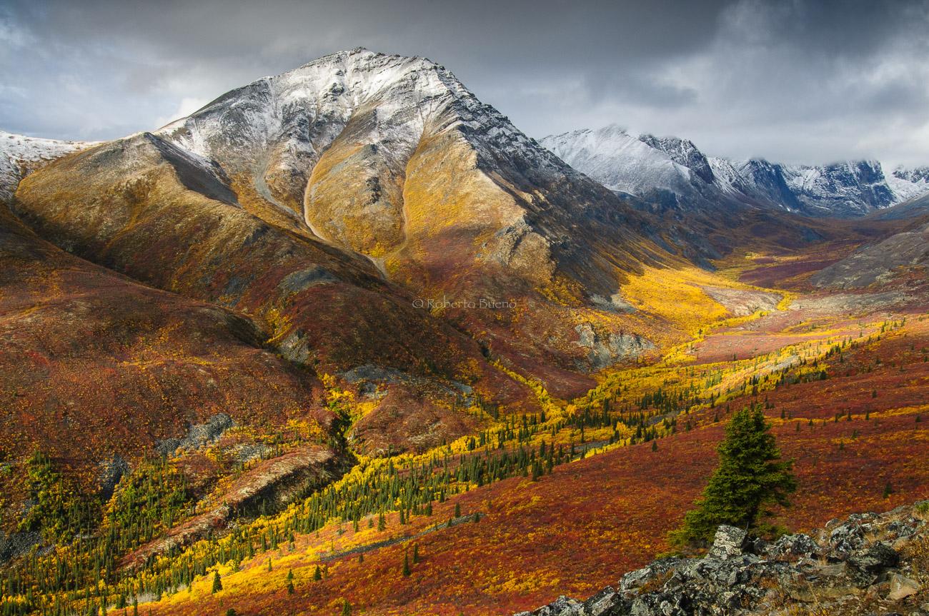 Las primeras nieves del otoño en el valle del Grizzly Creek. Tombstone Park. Yukon - Yukon, NWT y Dempster - Roberto Bueno. Luces del Planeta. Fotografías. Yukon, Territorios del Noroeste y Dempster Highway