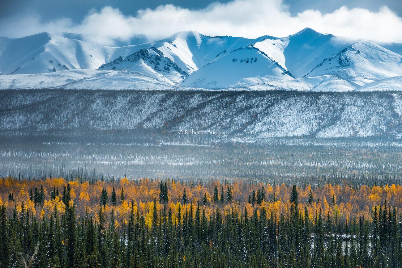 Taiga en el valle del río Ogilvie. Yukon - Yukon, NWT y Dempster - Roberto Bueno. Luces del Planeta. Fotografías. Yukon, Territorios del Noroeste y Dempster Highway