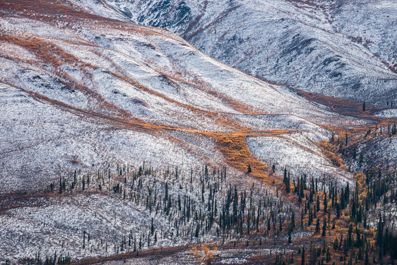 Otoño - invierno en el Klondike. Dempster Highway. Yukon - Yukon, NWT y Dempster - Roberto Bueno. Luces del Planeta. Fotografías. Yukon, Territorios del Noroeste y Dempster Highway