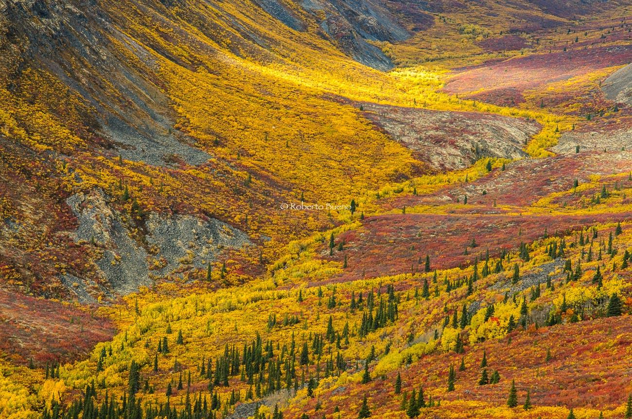 ¡Esto es otoño! Grizzly Creek Valley. Yukon - Yukon, NWT y Dempster - Roberto Bueno. Luces del Planeta. Fotografías. Yukon, Territorios del Noroeste y Dempster Highway