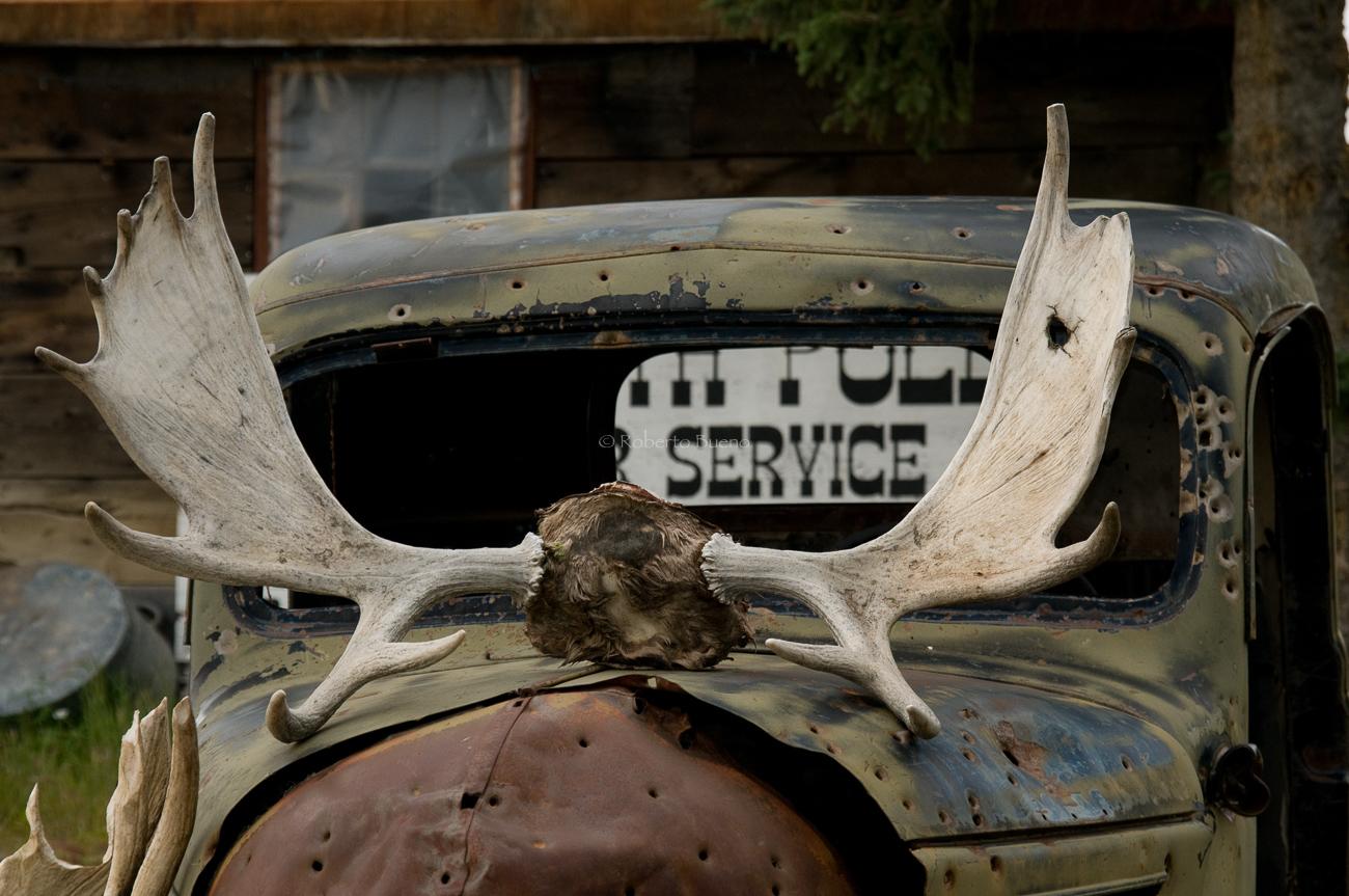 La vieja camioneta y cornamenta de alce - Yukon, NWT y Dempster - Roberto Bueno. Luces del Planeta. Fotografías. Yukon, Territorios del Noroeste y Dempster Highway