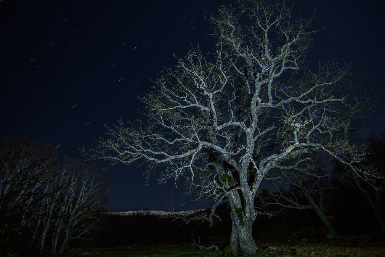 Roble y ecuador celeste. Sierra de Béjar - Luces en la noche - Luces en la Noche. Roberto Bueno. Fotografía de Naturaleza y viajes