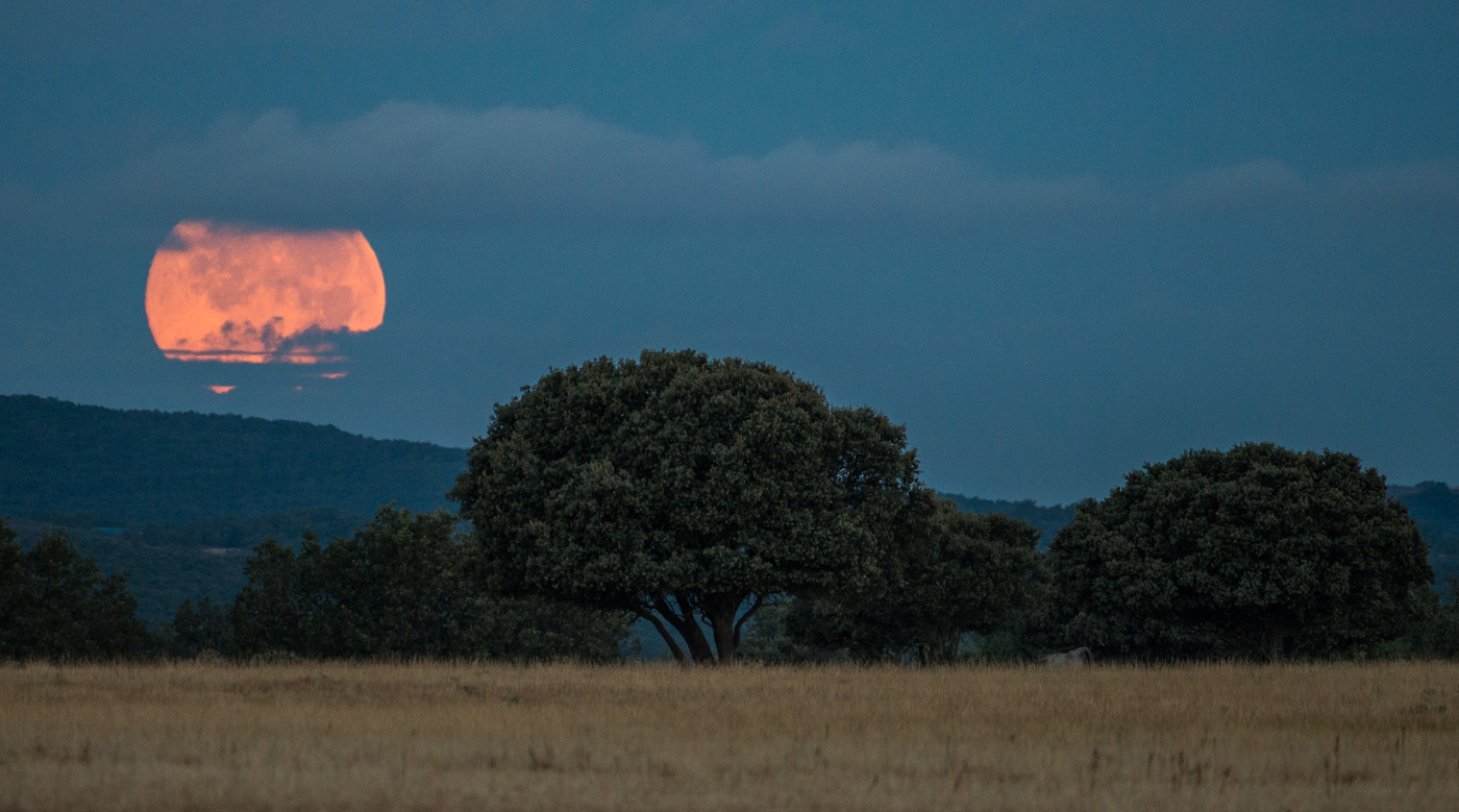 Amanece en el Serengeti bejarano - Luces en la noche - Luces en la Noche. Roberto Bueno. Fotografía de Naturaleza y viajes