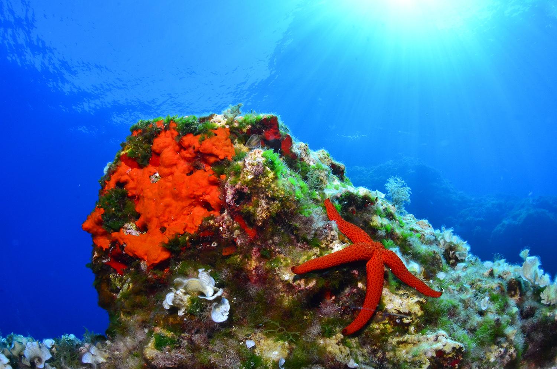 Paisajes marinos - Xavier Mas, Imágenes de naturaleza