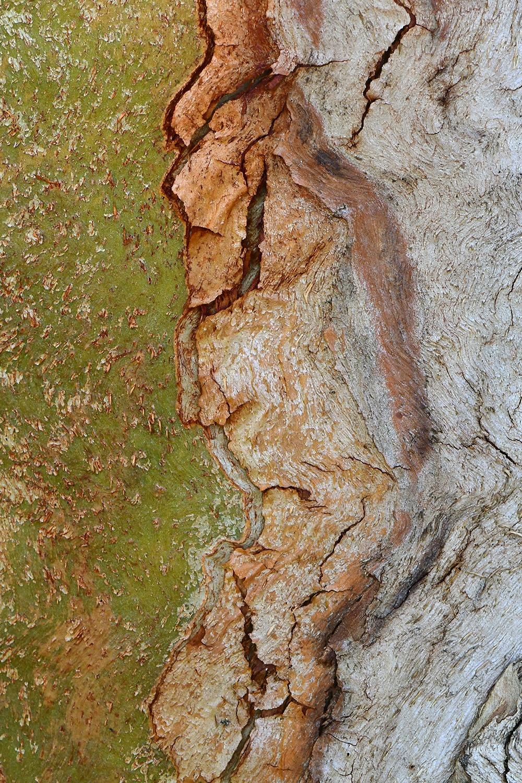 Pareidolia - Xavier Mas, Imágenes de naturaleza