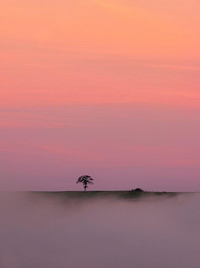 Buscando la luz - Javier Alonso Torre Fotografia de naturaleza buscando la luz