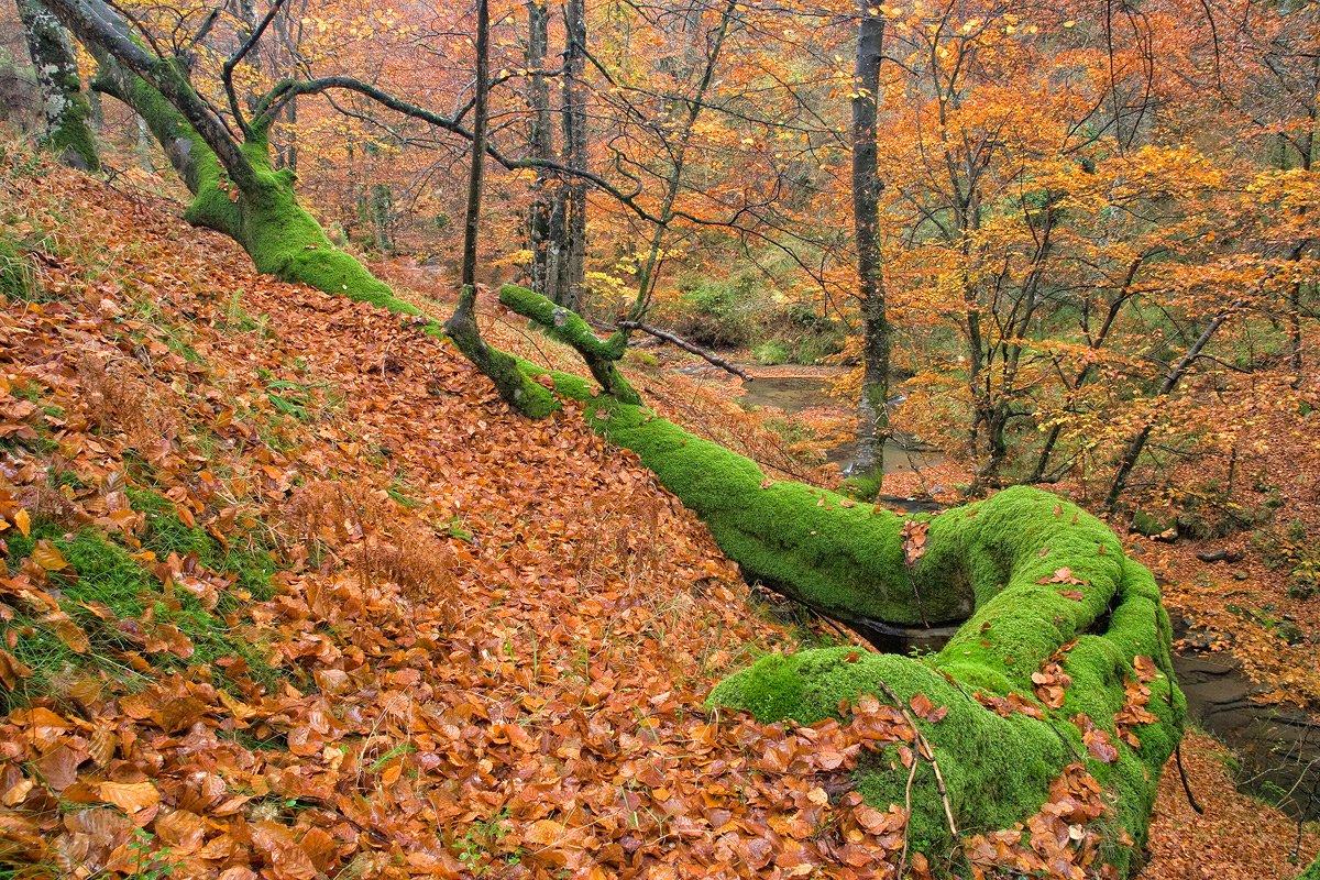 colores de otoño - Javier Alonso Torre Fotografia de naturaleza colores de otoño