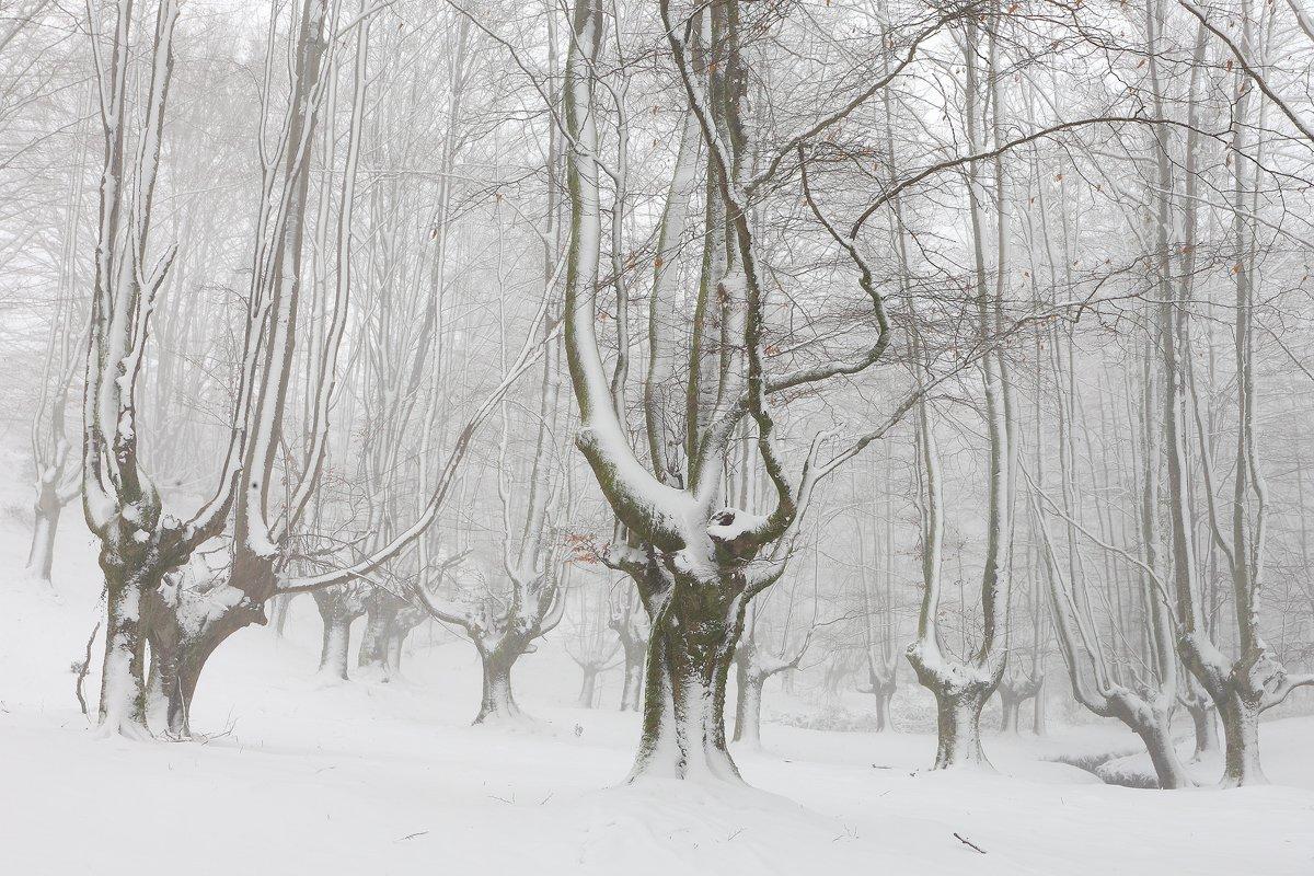 mundo blanco - Javier Alonso Torre Fotografia de naturaleza mundo blanco