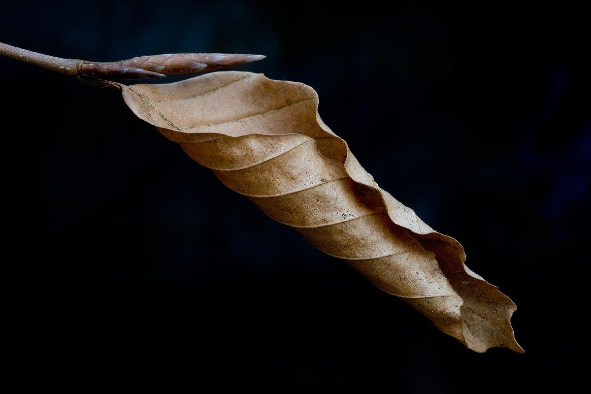 a ras de suelo - Javier Alonso Torre Fotografia de naturaleza a ras de suelo