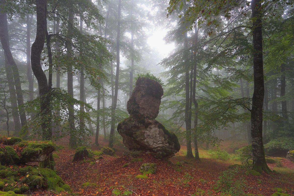 escondidos en el bosque - Javier Alonso Torre Fotografia de naturaleza escondidos en el bosque
