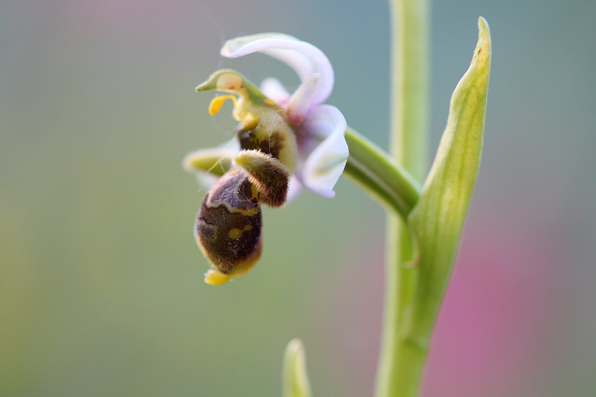 jardín de orquideas - Javier Alonso Torre Fotografia de naturaleza jardin de orquideas