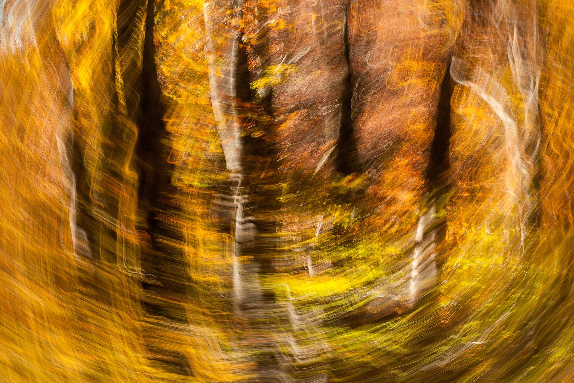 movimiento - Javier Alonso Torre Fotografia de naturaleza movimiento