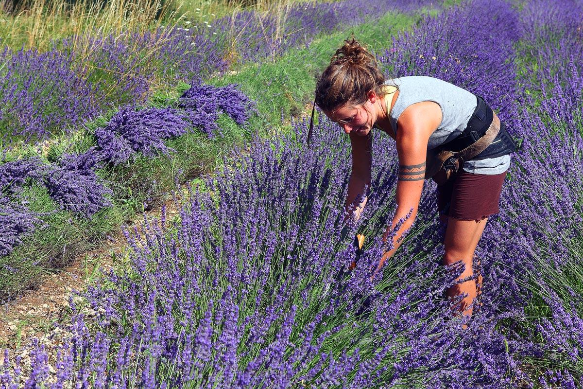 Provenza -  Javier Alonso Torre Fotografia de naturaleza provenza