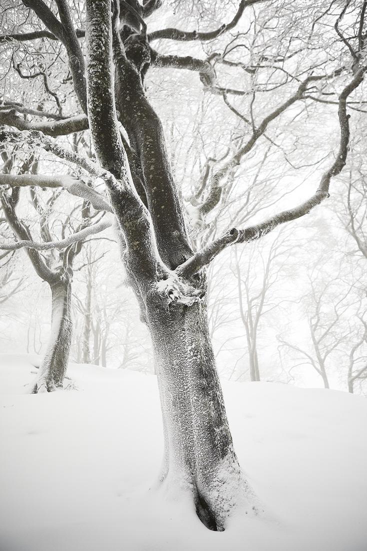 Caminantes blancos - Javier Alonso Torre, Fotografía