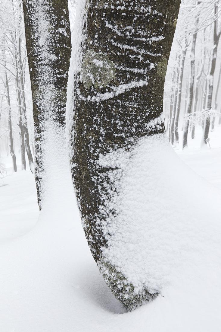 Caminantes blancos - Javier Alonso Torre Fotografía de naturaleza
